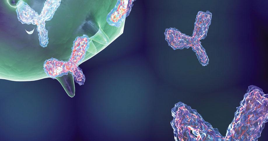 Antibody Search Engine - Enzo Life Sciences
